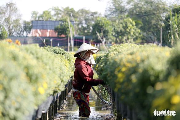 Nhà vườn Sa Đéc đầu tư tiền tỉ cho làng hoa dịp tết - Ảnh 4.
