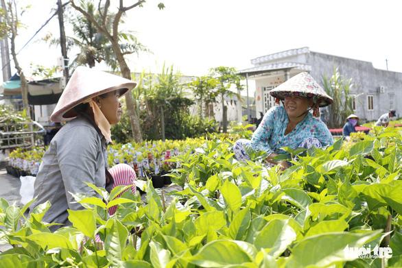 Nhà vườn Sa Đéc đầu tư tiền tỉ cho làng hoa dịp tết - Ảnh 5.