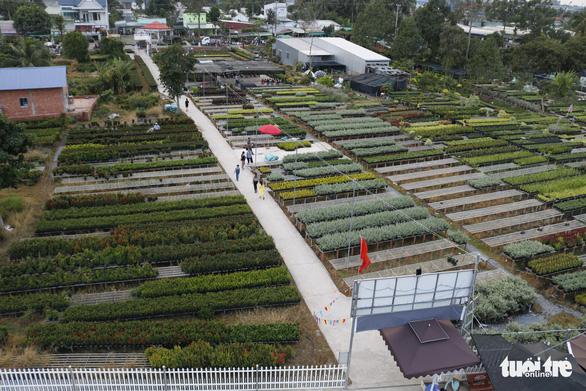 Nhà vườn Sa Đéc đầu tư tiền tỉ cho làng hoa dịp tết - Ảnh 8.