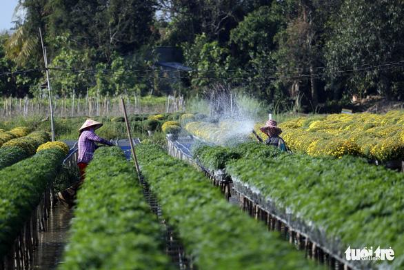 Nhà vườn Sa Đéc đầu tư tiền tỉ cho làng hoa dịp tết - Ảnh 6.