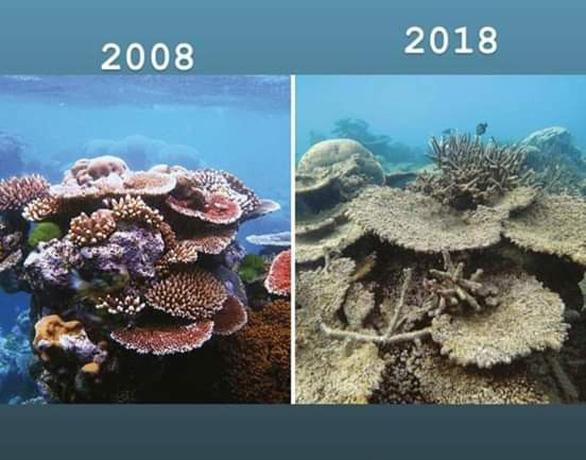 #10yearschallenge: Thiên nhiên đã mất đi thế nào trong 10 năm qua? - Ảnh 4.