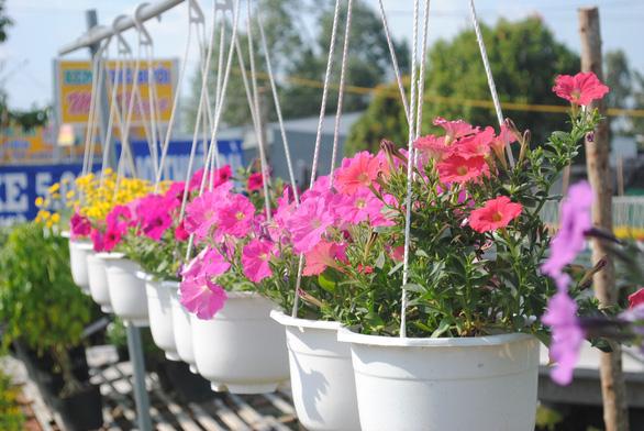 Làng hoa lớn nhất miền Tây chính thức thu phí tham quan 20.000 đồng - Ảnh 2.