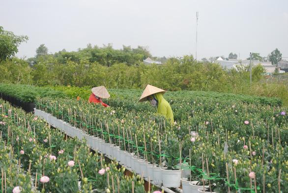 Làng hoa lớn nhất miền Tây chính thức thu phí tham quan 20.000 đồng - Ảnh 3.