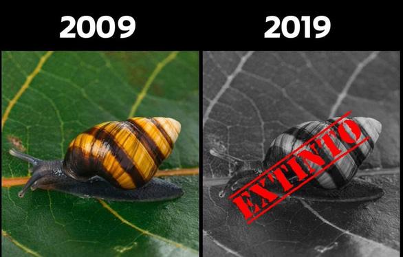 #10yearschallenge: Thiên nhiên đã mất đi thế nào trong 10 năm qua? - Ảnh 7.