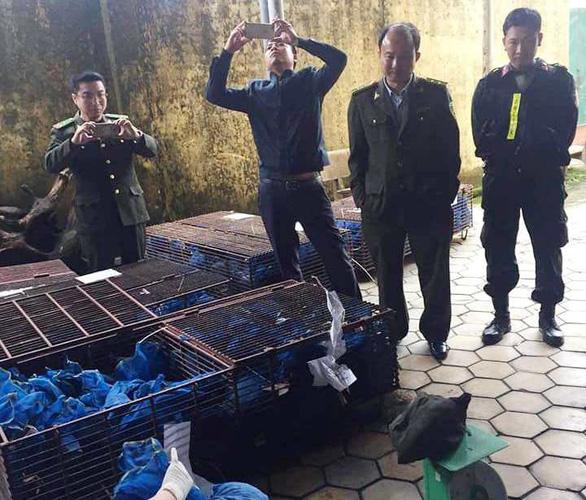 Bắt 9 người liên quan vụ buôn bán tê tê ở Hà Tĩnh - Ảnh 1.