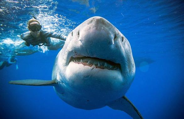 Lặn biển, chạm mặt cá mập trắng lớn nhất thế giới - Ảnh 2.