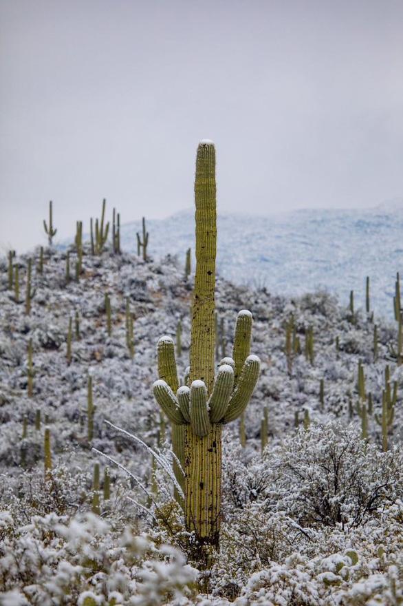 Ngắm hai thái cực của mẹ thiên nhiên: tuyết rơi sa mạc - Ảnh 12.