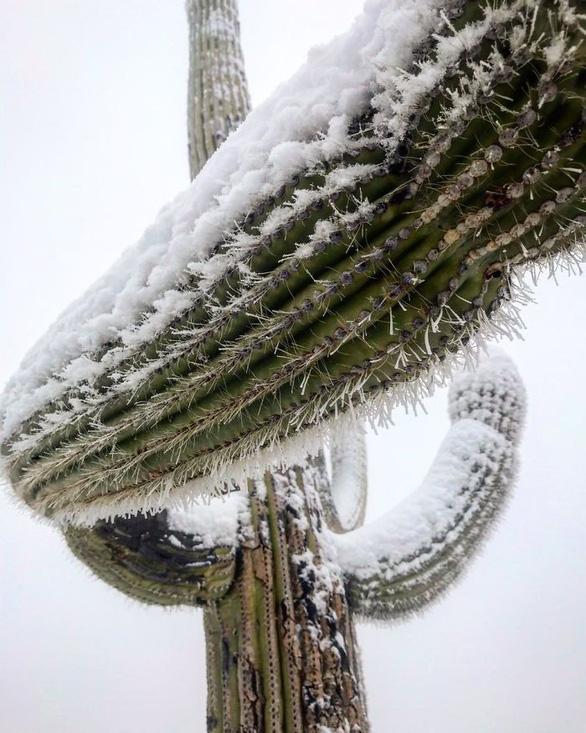 Ngắm hai thái cực của mẹ thiên nhiên: tuyết rơi sa mạc - Ảnh 8.