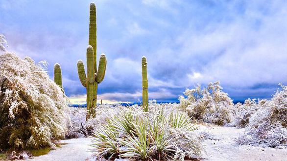 Ngắm hai thái cực của mẹ thiên nhiên: tuyết rơi sa mạc - Ảnh 6.