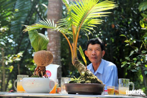 Độc đáo bonsai dừa của chàng trai Bến Tre - Ảnh 3.