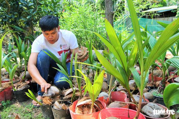 Độc đáo bonsai dừa của chàng trai Bến Tre - Ảnh 7.