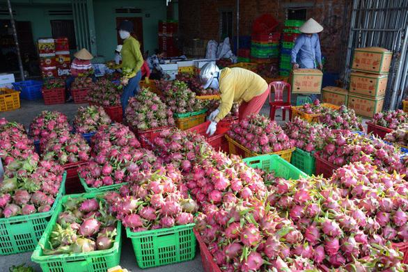 Xuất khẩu rau quả sang Trung Quốc tắc nghẽn, bộ khẩn cấp khuyến cáo - Ảnh 2.
