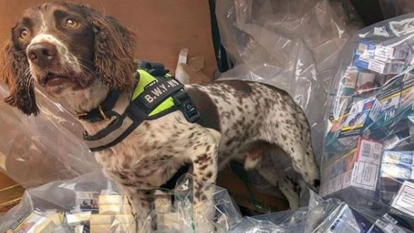 Tội phạm buôn lậu ra giá 750 triệu đồng lấy đầu chó nghiệp vụ - Ảnh 1.