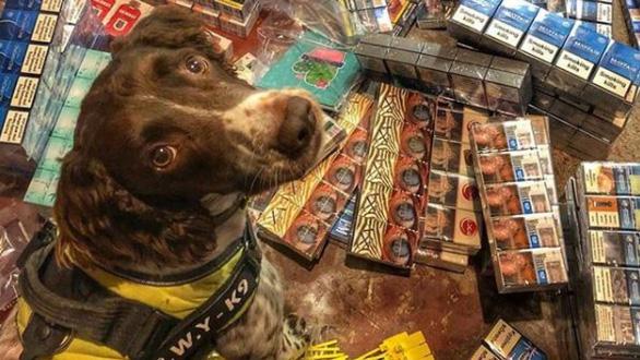 Tội phạm buôn lậu ra giá 750 triệu đồng lấy đầu chó nghiệp vụ - Ảnh 2.