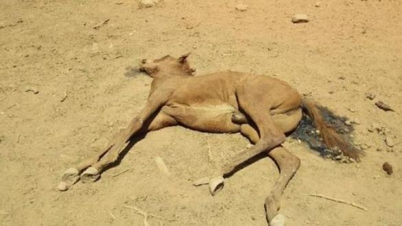 Nắng quá nóng, ngựa hoang ở Úc chết cả bầy như bị thảm sát - Ảnh 3.