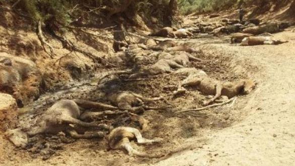 Nắng quá nóng, ngựa hoang ở Úc chết cả bầy như bị thảm sát - Ảnh 2.