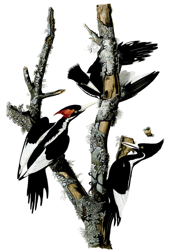 Những cái tổ giả cho chim gõ kiến - Ảnh 1.