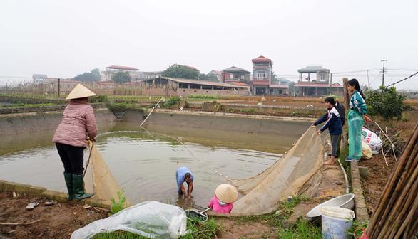 Lãi trăm triệu nhờ nuôi cá chép đỏ phục vụ ông Công, ông Táo - Ảnh 3.
