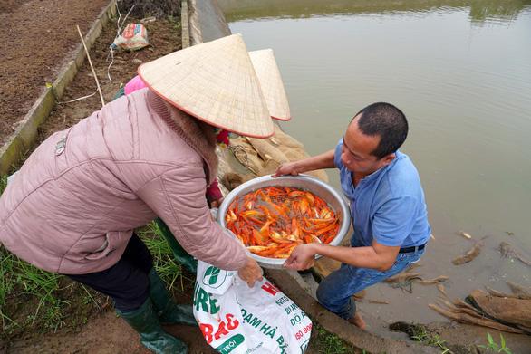 Lãi trăm triệu nhờ nuôi cá chép đỏ phục vụ ông Công, ông Táo - Ảnh 4.