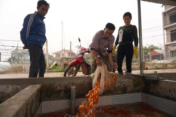 Lãi trăm triệu nhờ nuôi cá chép đỏ phục vụ ông Công, ông Táo - Ảnh 5.