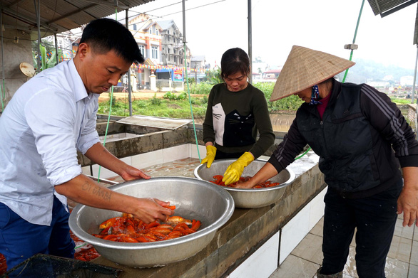 Lãi trăm triệu nhờ nuôi cá chép đỏ phục vụ ông Công, ông Táo - Ảnh 8.