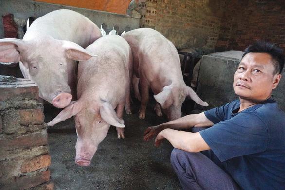 Năm Hợi, xem làng La Phù nuôi ông lợn lễ - Ảnh 3.
