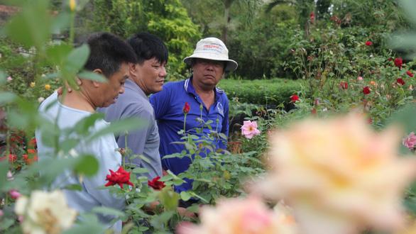 Thăng trầm làng hoa Sa Đéc - Kỳ 3: Chuyện về vườn hồng Tư Tôn - Ảnh 2.