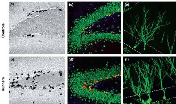 Ươm giống một nơron, vun trồng một bộ não - Ảnh 2.