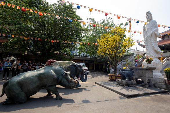 Tê giác, voi quỳ kêu cứu ở sân chùa Vĩnh Nghiêm, Minh Đăng Quang - Ảnh 2.