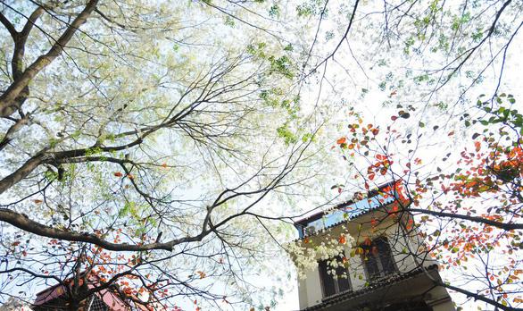 Hà Nội đề xuất xây nhà cao tầng trong khu phố cũ - Ảnh 1.