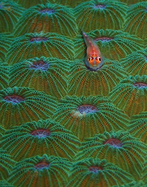Nghẹt thở những bức ảnh ấn tượng chụp dưới nước - Ảnh 8.