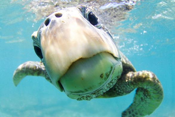 Nghẹt thở những bức ảnh ấn tượng chụp dưới nước - Ảnh 2.