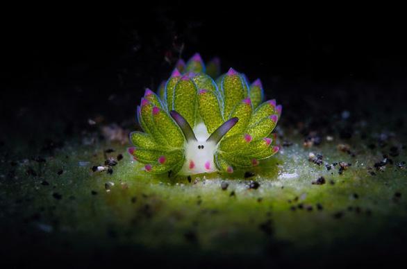 Nghẹt thở những bức ảnh ấn tượng chụp dưới nước - Ảnh 3.