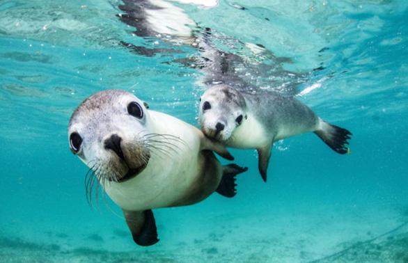 Nghẹt thở những bức ảnh ấn tượng chụp dưới nước - Ảnh 7.