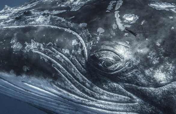 Nghẹt thở những bức ảnh ấn tượng chụp dưới nước - Ảnh 10.