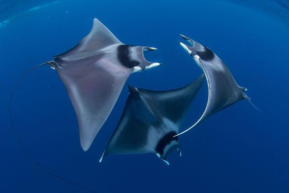 Nghẹt thở những bức ảnh ấn tượng chụp dưới nước - Ảnh 1.