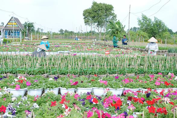 Thăng trầm làng hoa Sa Đéc - Kỳ 6: Gian nan nghề hoa - Ảnh 5.
