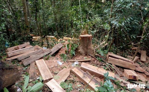 Rừng phòng hộ Krông Pha bị phá - Ảnh 1.