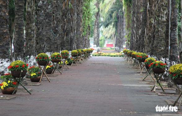 Hàng loạt giỏ hoa trang trí tết trên đường phố Nghệ An bị trộm - Ảnh 2.
