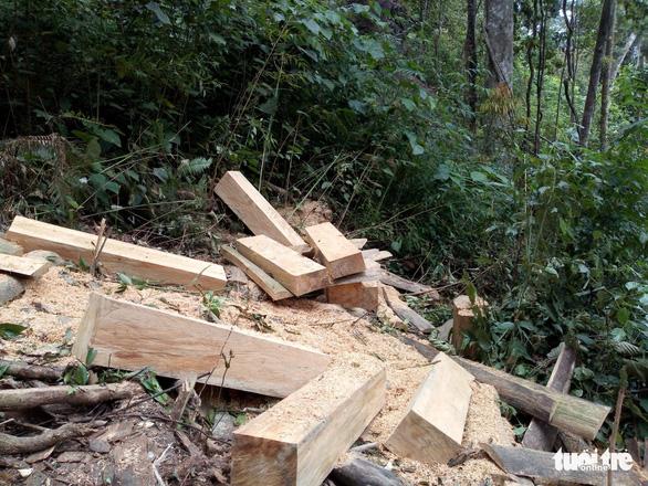 Rừng phòng hộ Krông Pha bị phá - Ảnh 6.