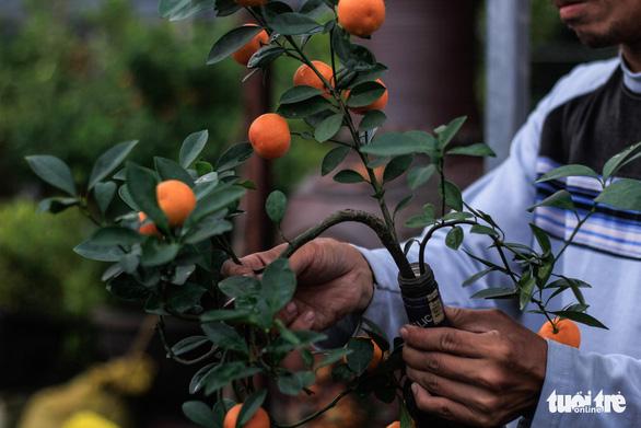 Lạ mắt với quất bonsai trong chai thủy tinh - Ảnh 5.
