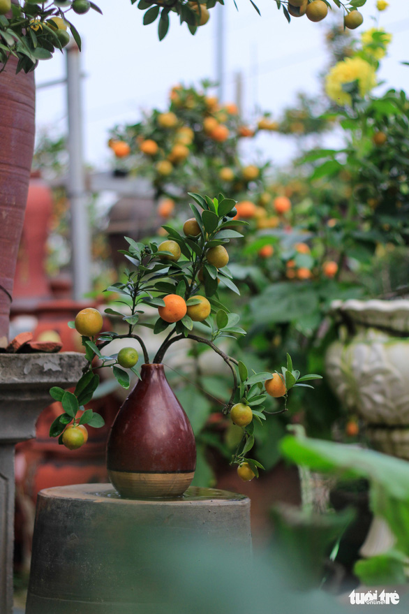 Lạ mắt với quất bonsai trong chai thủy tinh - Ảnh 4.
