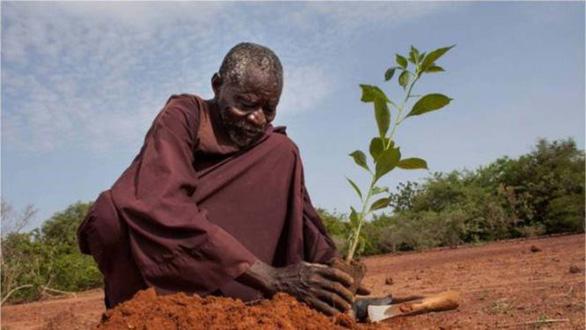 Lão nông biến sa mạc thành rừng - Ảnh 1.