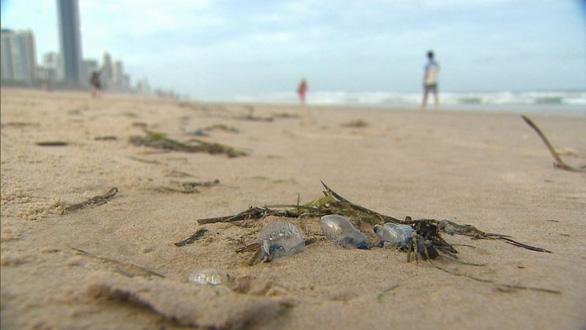 Sứa độc tấn công bờ biển Úc, hơn chục ngàn người bị đốt - Ảnh 1.