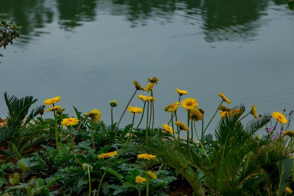 Ngắm xuân trên đảo hoa hồ Núi Cốc - Ảnh 7.