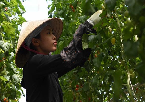 Vòi tiền bạc khi tiếp nhận lao động Việt, 2 tổ chức ở Nhật bị đóng cửa - Ảnh 1.