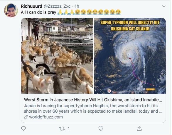 Người Nhật bỏ người, cầu nguyện cho mèo trong siêu bão Hagibis? - Ảnh 2.