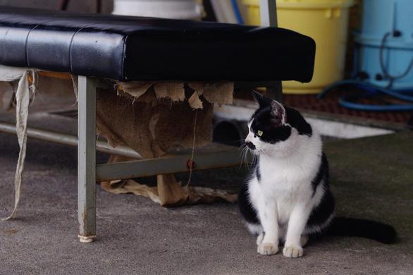 Người Nhật bỏ người, cầu nguyện cho mèo trong siêu bão Hagibis? - Ảnh 1.