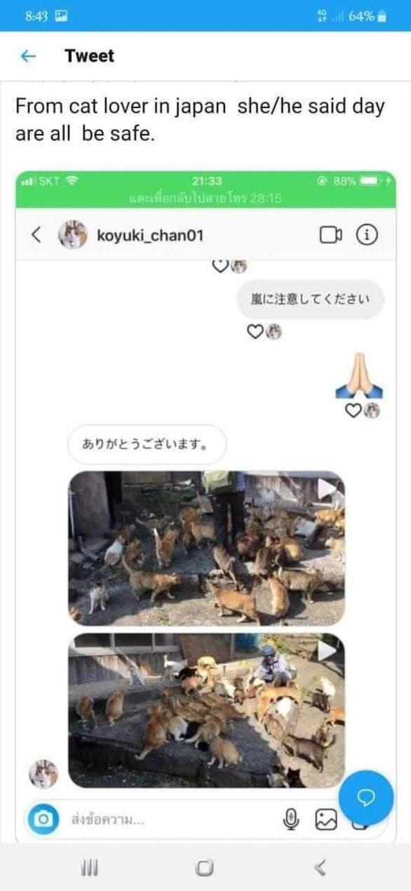 Người Nhật giải cứu đảo mèo Okishima giữa bão Hagibis chỉ là tin vịt - Ảnh 2.