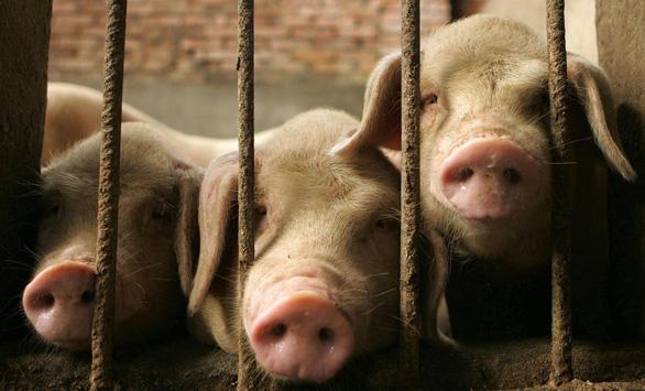 Trung Quốc khủng hoảng thiếu thịt heo, mua 700.000 tấn từ Mỹ - Ảnh 1.